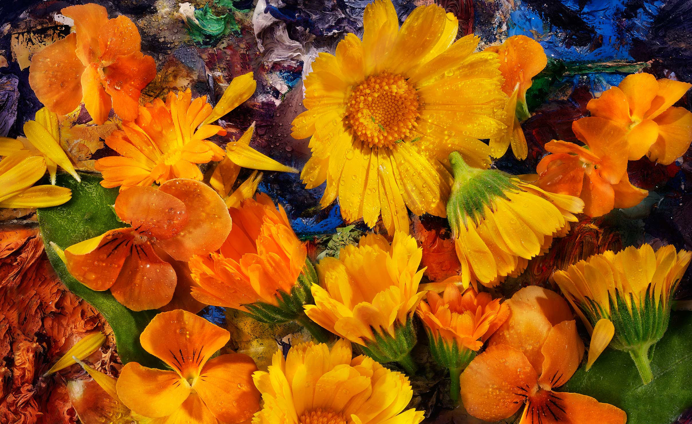 Edible Flowers: Pansies and Calendula