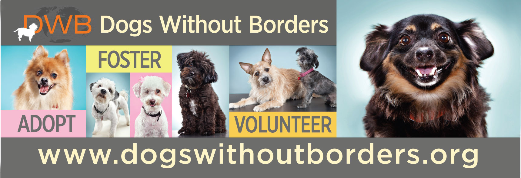Dogs-Without-Borders