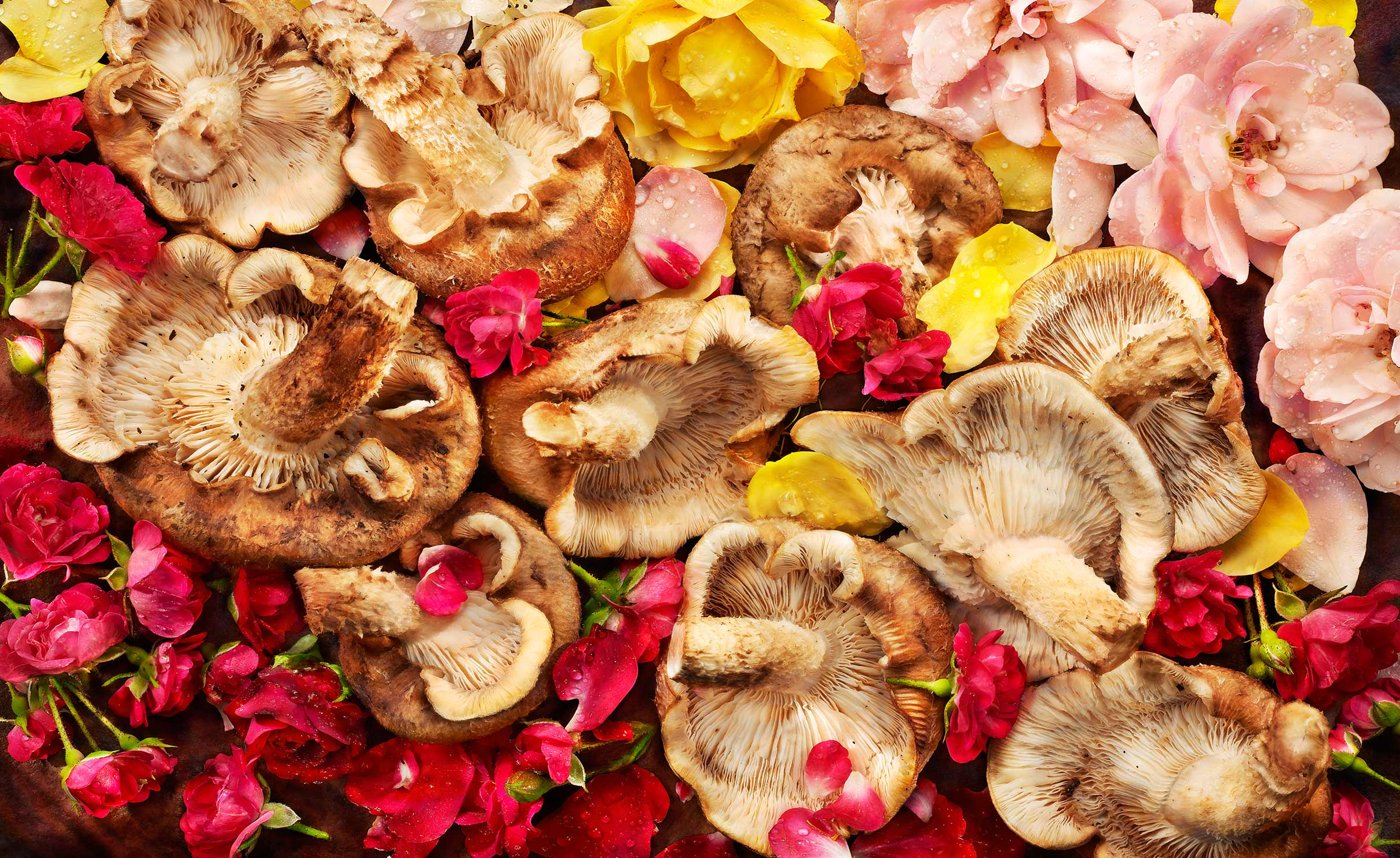 Edibles: Roses and Mushrooms2