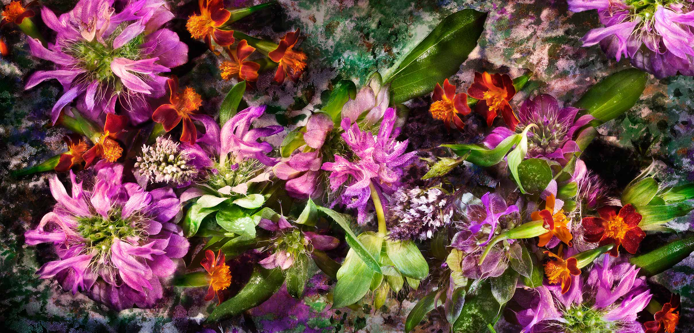 Glasshouse Assignment - David Bishop - Elements Series - Lemon Bee Balm
