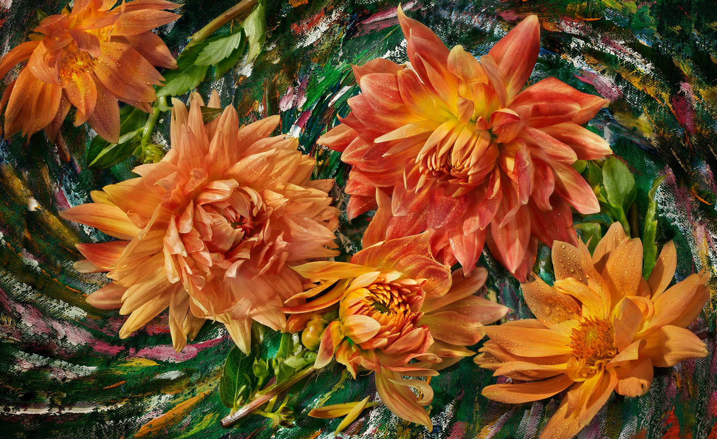 Orange-Dahlias