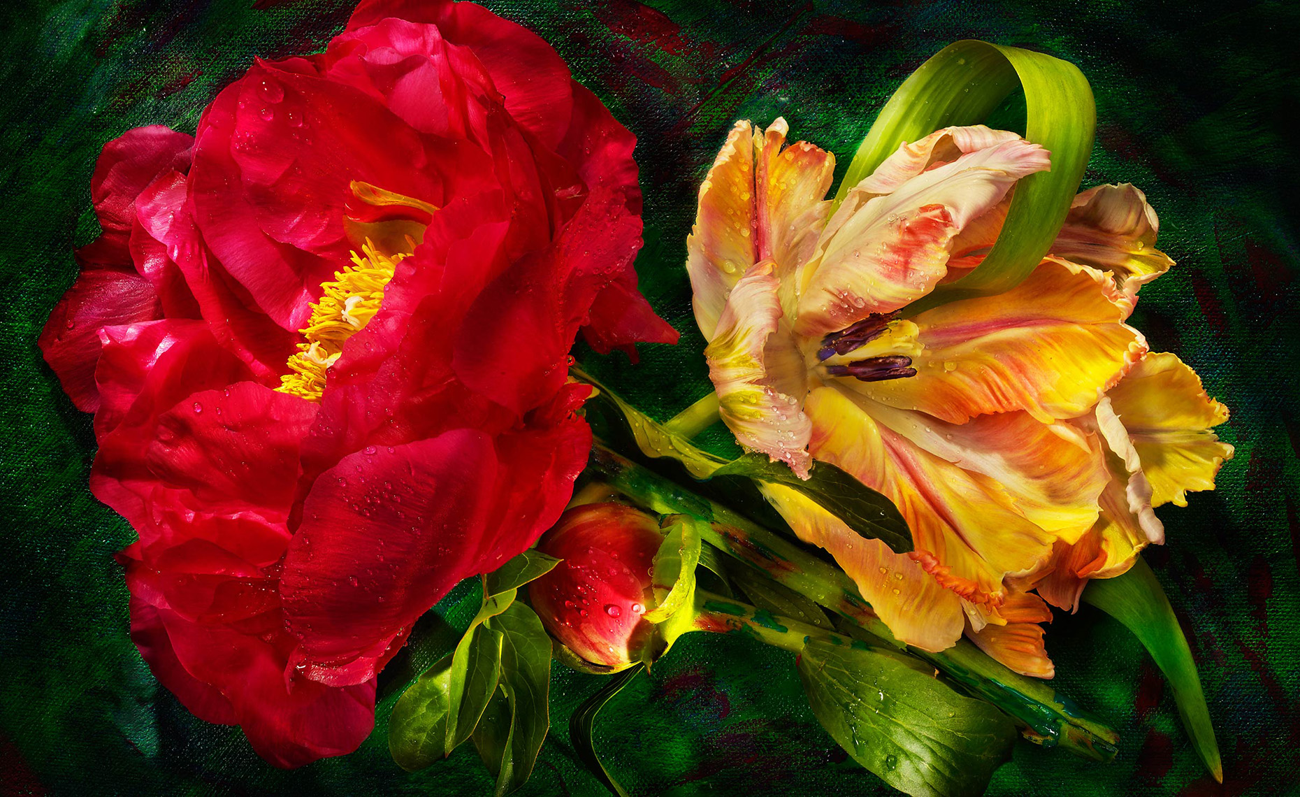 Parrot-and-Peony-3_APF