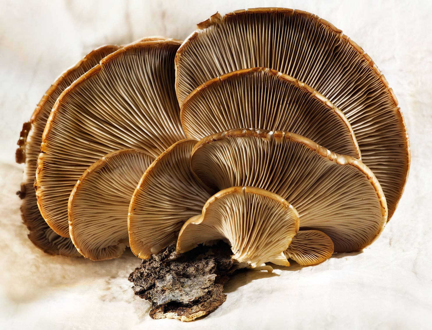 Glasshouse Assignment - David Bishop - Food Photography - Mushroom