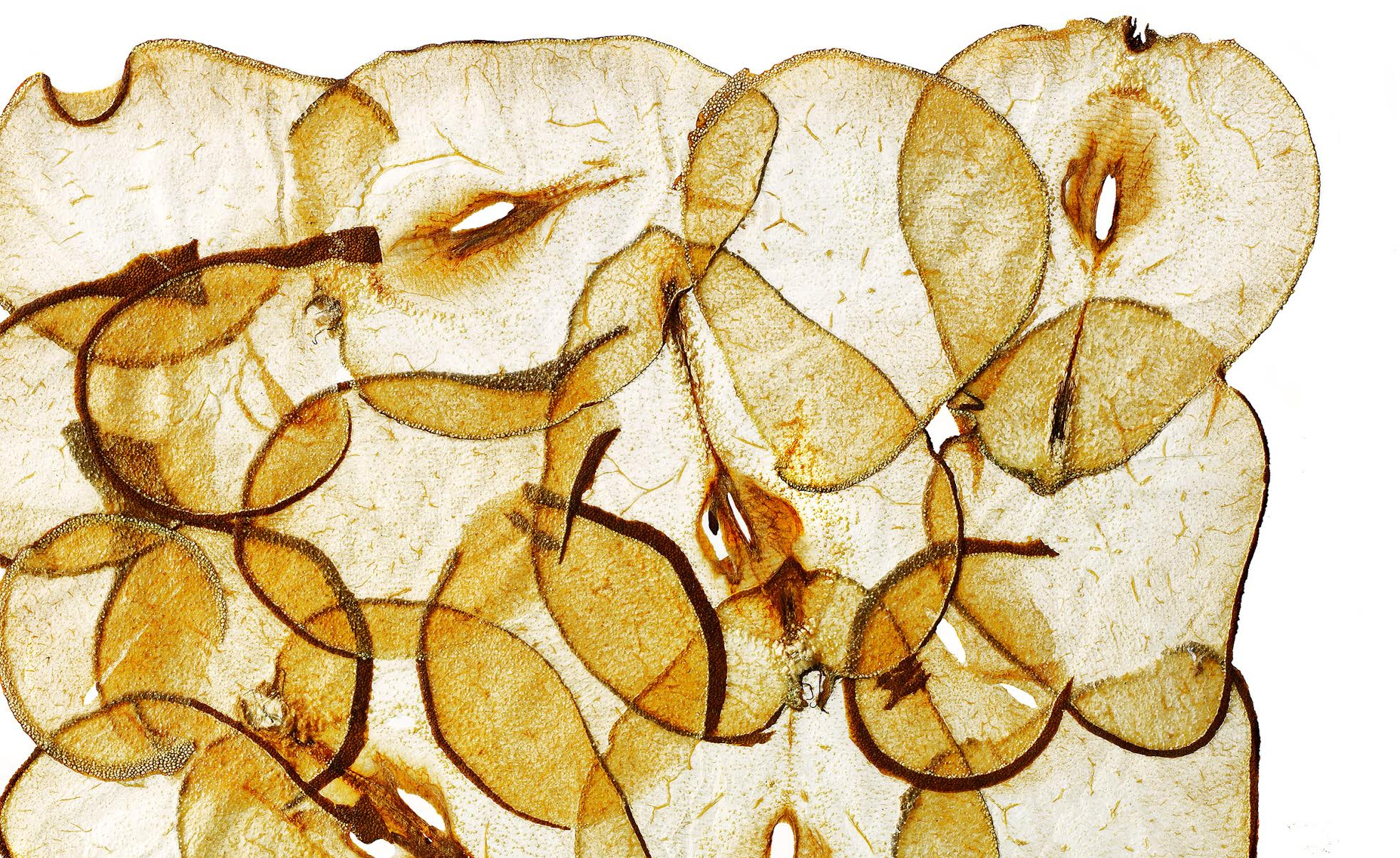 Glasshouse Assignment - David Bishop - Elements Series - Dried Pears